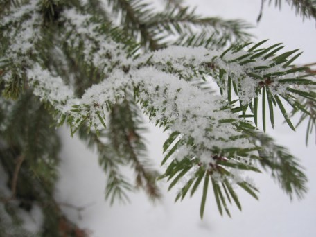 Fir or Spruce? Can you tell without feeling them?